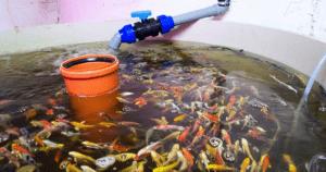 Aquaponics Growing System