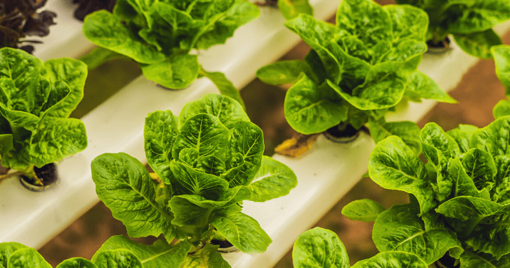 Advantages of Hydroponics Gardening
