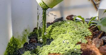 Hydroponics Gardening Watering