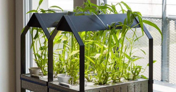 How to Grow Food at Home Using Hydroponics