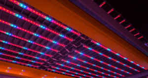 LED lights with hydroponics system cultivating plants