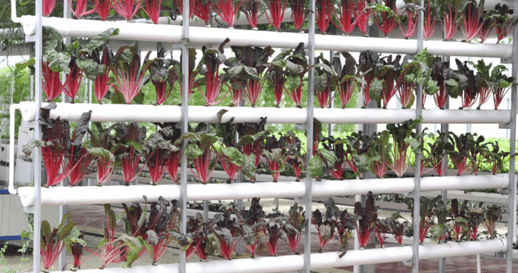 Hydroponics vs. Climate Change – Part 1: It's The End of the World as We Know It…