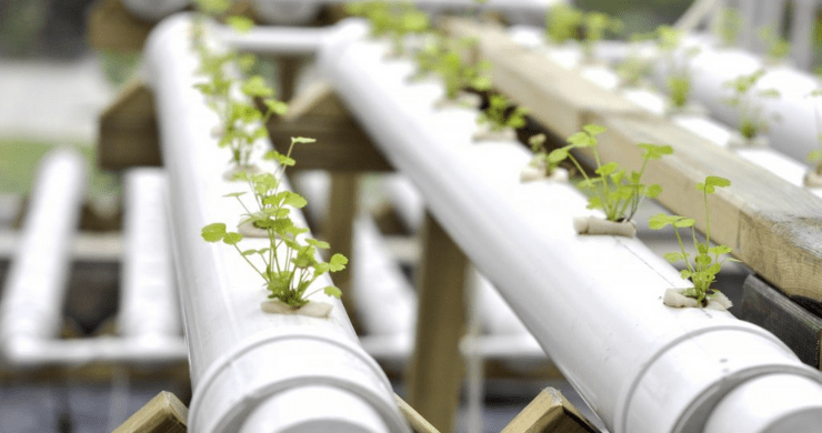 Hydroponics vs. Aquaponics Gardening, Which is Best?
